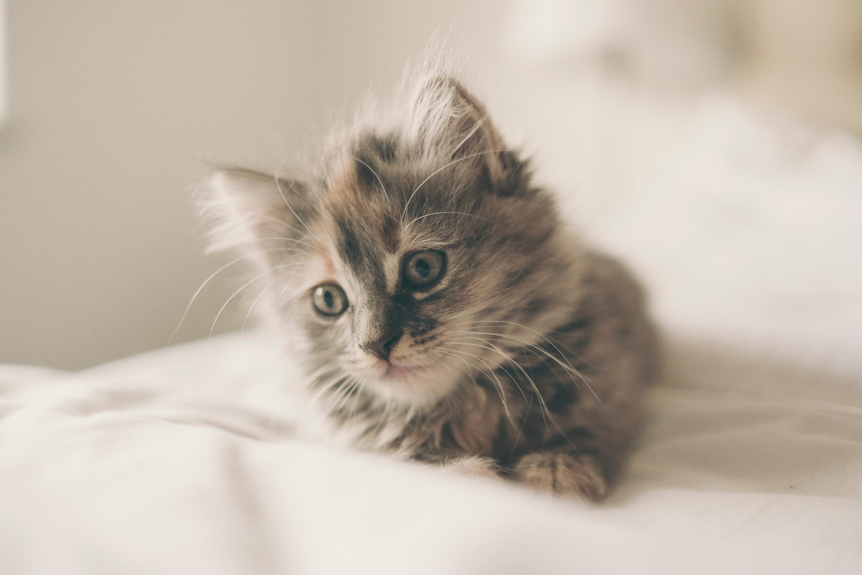 Non innamoratevi di una donna che ama i gatti